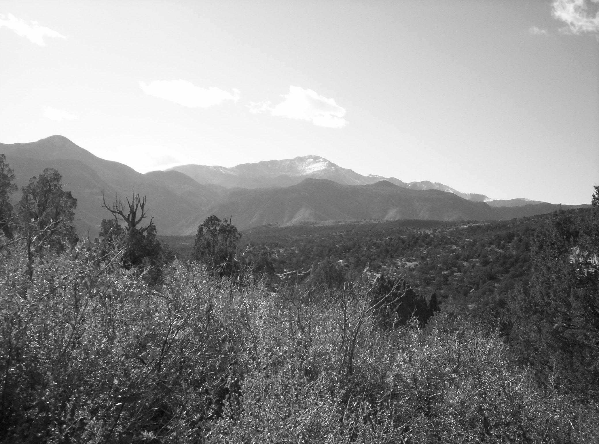 Buena Vista Copyright © 2008 David M. Bandler, All Rights Reserved.
